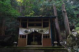 161022湯島の大杉⑦