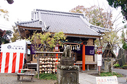 161112 八坂神社の欅