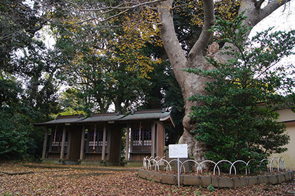 161123臼井稲荷神社の欅⑦
