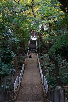 161123二宮神社銀杏⑧