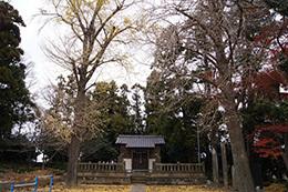 161207羽生御霊神社のエノキ