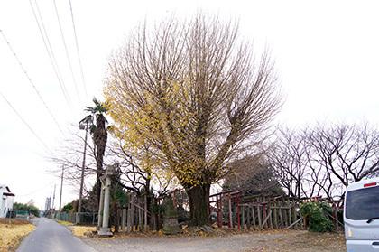 161207堂城稲荷神社銀杏①