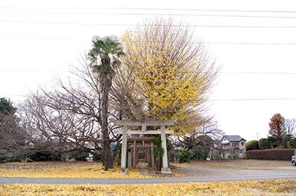 161207堂城稲荷神社銀杏②