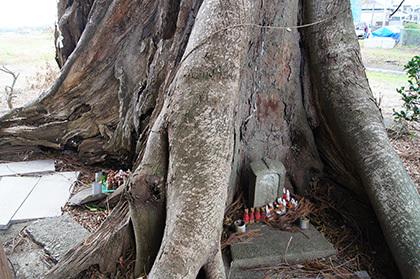 161207堂城稲荷神社の榎⑦