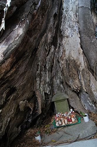 161207堂城稲荷神社の榎⑧