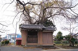 161207堂城稲荷神社の榎⑪