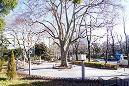 170118四谷見附公園⑧