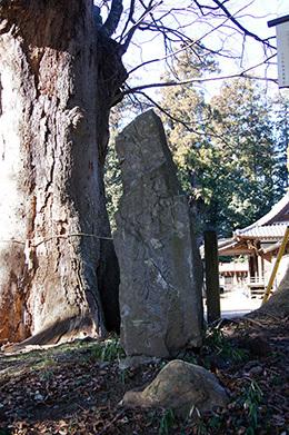 170128小川町八幡神社の欅⑤