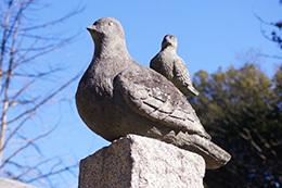 170128小川町八幡神社の欅⑦