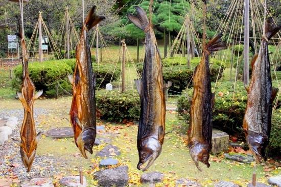 ⑤若林家の鮭