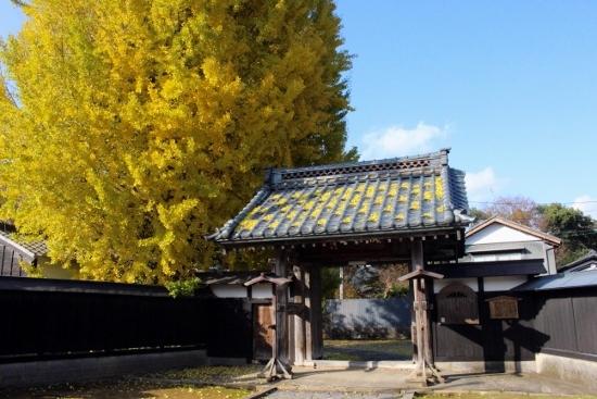 ⑩浄念寺のイチョウ