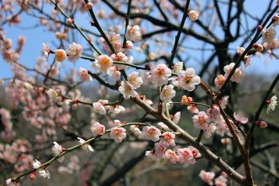 ⑭岡本梅林公園 (550x367)