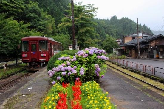 ㉖紫陽花と列車 (550x367)