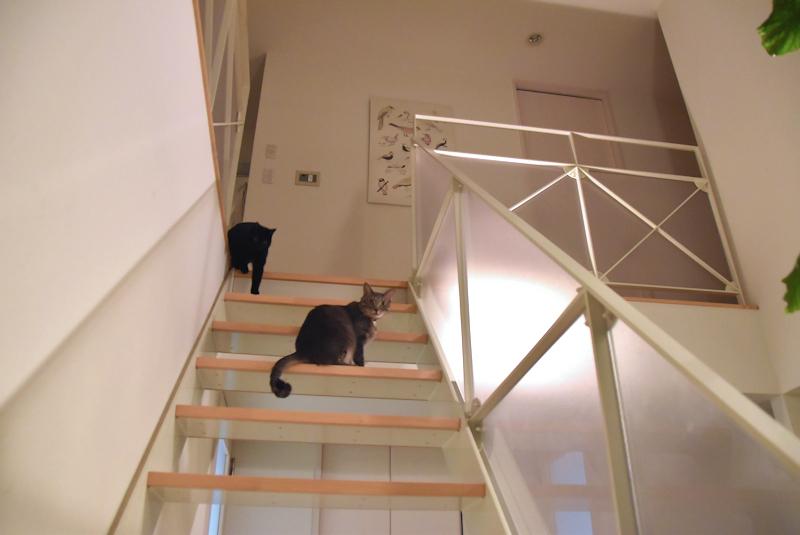 1階段の2ひき