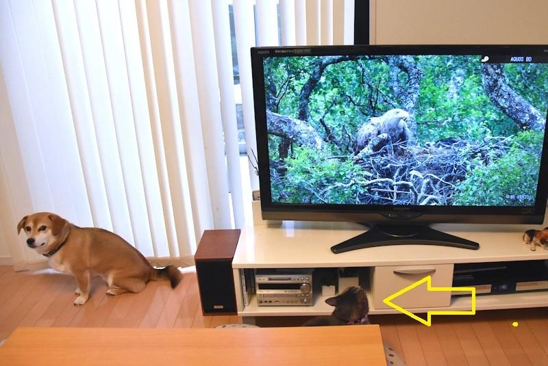 01TVを見る花ちゃん