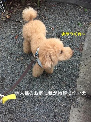 IMG_4668-1.jpg