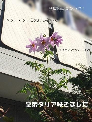 IMG_4699-1.jpg