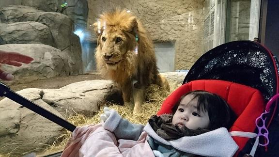 ライオンにすごまれる②