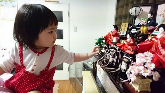 20180204 ひな人形に触りたいいちご