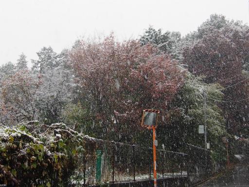 20161124・11月なのに初雪1-10