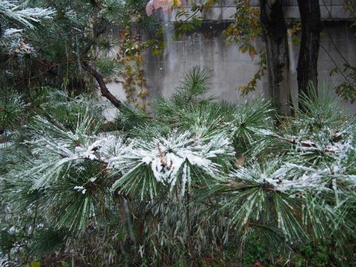 20161124・11月なのに初雪1-07・6時58分