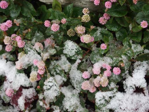 20161124・11月なのに初雪1-15・7時11分