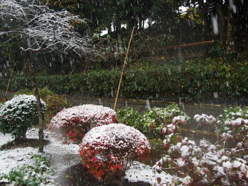 20161124・11月なのに初雪2-06・7時22分