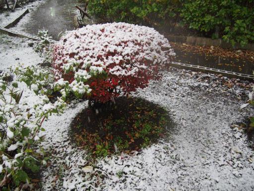 20161124・11月なのに初雪2-05・7時21分