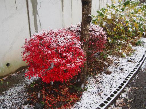20161124・11月なのに初雪2-01・7時19分