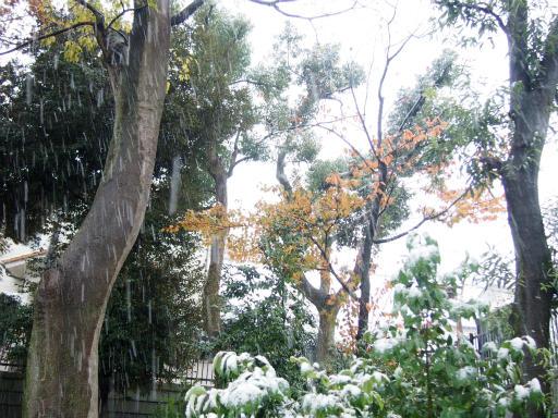 20161124・11月なのに初雪空06・7時15分=小谷公園