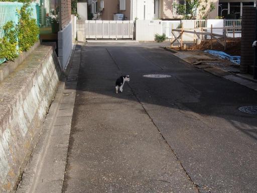 20161204・近所猫01