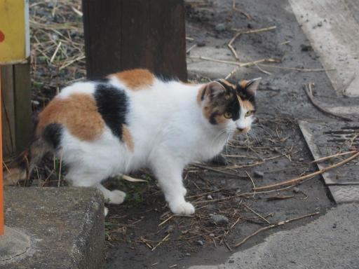 20161204・近所猫12