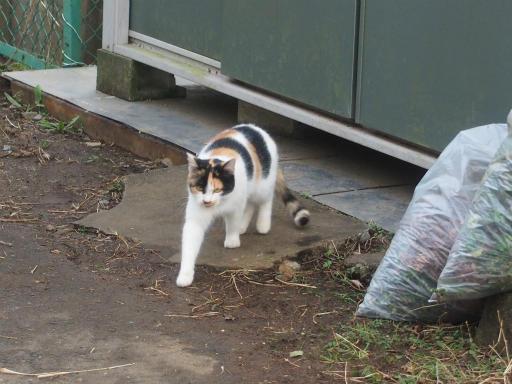 20161204・近所猫09