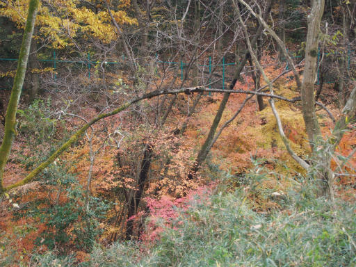 20161204・チラシを見て散歩2-13