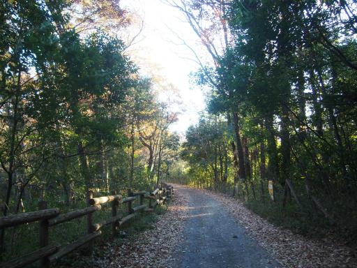 20161211・八国山散歩1-18・未舗装