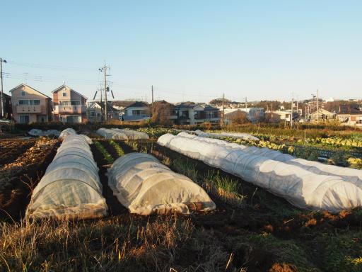20161225・狭山富士散歩2-09