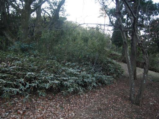 20161225・狭山富士散歩2-24