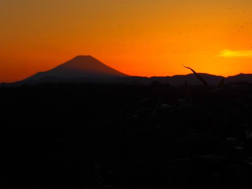 20161225・狭山富士散歩3-17
