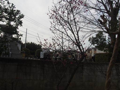 20170129・永源寺散歩空14・永源寺の梅