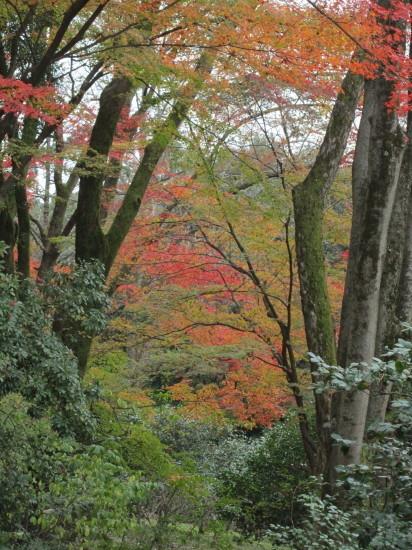 京都市植物園0001
