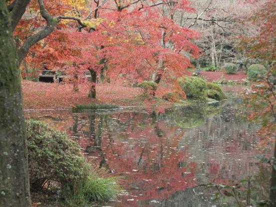 京都市植物園0001_1