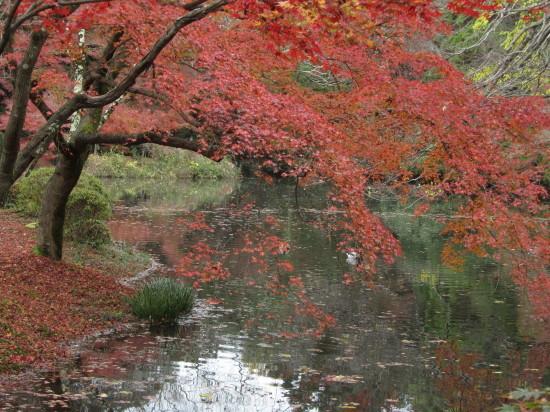 京都市植物園0001_3