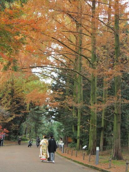 京都市植物園0001_2