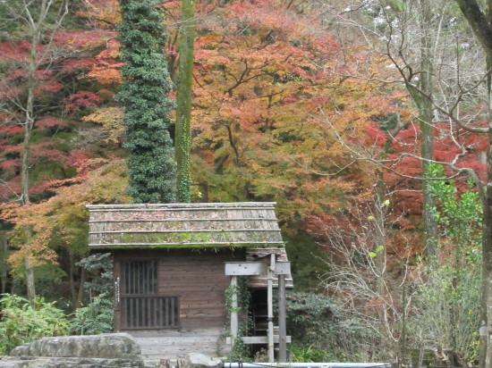 京都市植物園0001_5