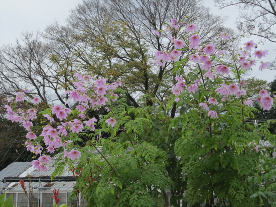 京都市植物園0001_6