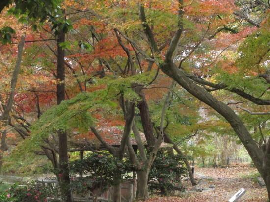 京都市植物園0001_9
