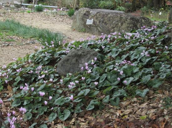 京都市植物園0001_8