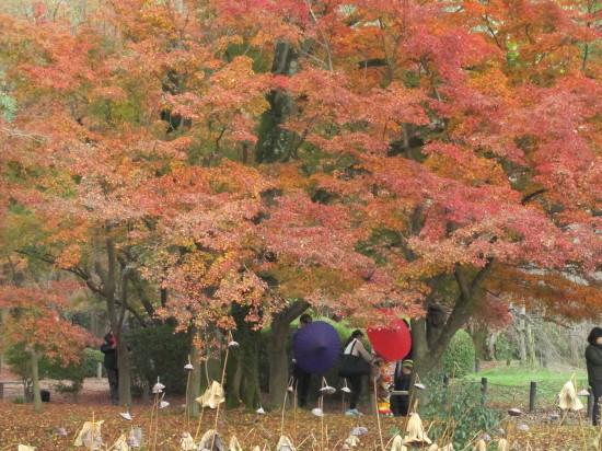 京都市植物園0001_10