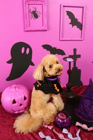 Halloween 2016 02