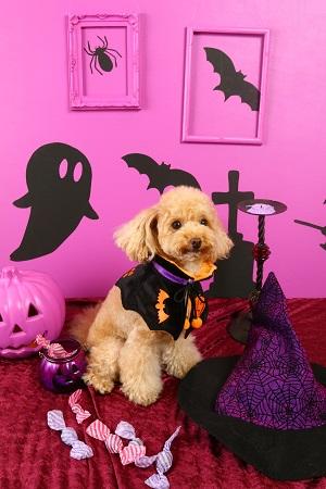 Halloween 2016 05